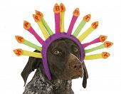 stock photo of headband  - happy birthday dog  - JPG