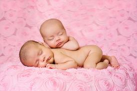 stock photo of twin baby  - Fraternal twin newborn baby girls sleeping on pink three dimensional rose fabric - JPG