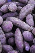 picture of ube  - Purple yams (Dioscorea alata), a tuberous root vegetable, has its origins in the Asian tropics and has been consumed by humans since ancient times to make both a sweet and savory dishes.