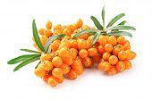 stock photo of sea-buckthorn  - Sea buckthorn berries branch on a white background
