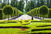 picture of symmetrical  - Park alley with symmetrically planted trees - JPG