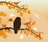 picture of songbird  - Illustration of songbirds mobbing an owl on a branch - JPG
