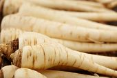 foto of parsnips  - Closeup of a bunch of parsnip with selective focus