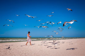 pic of flock seagulls  - Young woman in a nice dress feeding a flock of seagulls on a white sand beach - JPG