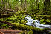 stock photo of olympic mountains  - Beautiful cascade waterfall in Sol Duc falls trail Olympic national park WA US - JPG
