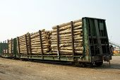 picture of railcar  - Logs arriving on railcar at a sawmill - JPG