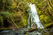 stock photo of olympic mountains  - Waterfall in rain forest Olympic national Park - JPG