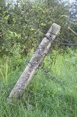 pic of barbed wire fence  - barbed wire fence on meadows - JPG