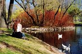 pic of duck pond  - Girl with long colorful braids sitting by a duck pond in sunny spring weather - JPG