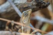 stock photo of lizards  - Green crested lizard black face lizard tree lizard on tree - JPG