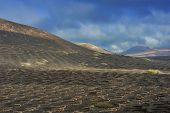 pic of canary-islands  - vineyards on black volcanic sand at La Geria Valley Lanzarote Island Canary Islands Spain - JPG