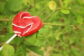 image of valentine candy  - Candy valentines hearts on a green tree - JPG