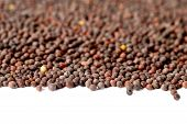 picture of mustard seeds  - close up of Brown Mustard Seeds on white background - JPG