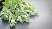 foto of oregano  - A bunch of fresh oregano on a dark stone background - JPG