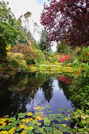 stock photo of weeping  - Fantastic floral Butchart Gardens on Vancouver Island - JPG