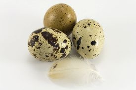 foto of quail egg  - Type of quail eggs and quail feather on a white background - JPG