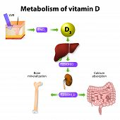 Metabolism Of Vitamin D poster