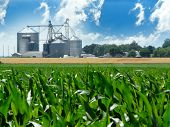 image of ethanol  - Lush green corn field with grain bins in the distance - JPG