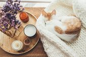 Ginger kitten sleeping on knitted woolen sweater. Wooden tray with home decor near the window. Fall  poster