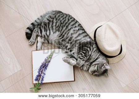 poster of Home Pet Cute Kitten Cat Lying At Home. Cat Portrait. Cute Cat Indoor Shooting. View From Above Of F