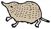 foto of shrew  - shrew cartoon - JPG