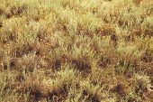 Arid Terrain. Yellow Grass. Summer Heat Drought poster