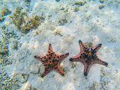 Orange Starfish Couple On Sandy Sea Bottom. Underwater Photo Of Star Fish In Tropical Seashore. Exot poster