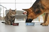 Tabby Cat And Dog Eating From Bowl On Floor Indoors. Funny Friends poster