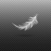 White Bird Feather Isolated On Transparent Background, Realistic Fluffy Swan Plumage Floating In Air poster