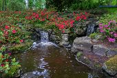 Tranquil Water Feature In A Lush Beautiful Green Woodland Garden With Dense Foliage And Rhododendron poster