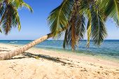 Travel Vacation Tropical Destination. Palm Tree Beach Landscape. Travel Vacations Destination. Trave poster