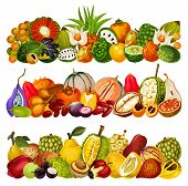 Exotic Fruits Harvest, Tropical Farm Agriculture Pandan, Juicy Citrus Bergamot And Akebia, Vector Tr poster