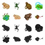 Isolated Object Of Wildlife And Bog Sign. Collection Of Wildlife And Reptile Vector Icon For Stock. poster