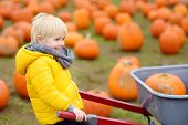 Little Boy On A Tour Of A Pumpkin Farm At Autumn. Child Sitting On Giant Pumpkin. Pumpkin Is Traditi poster