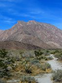 pic of anza  - anza borrego area desert - JPG