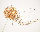 picture of dandelion  - Abstract autumn concept - JPG