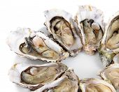 stock photo of oyster shell  - Oysters isolated on white - JPG
