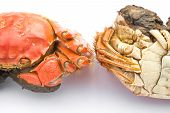 foto of cooked crab  - two cooked crabs on a white background