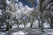 infrared photo of park and trees