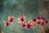 Hawaiian orchid with a texture overlay for a vintage look.