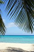 stock photo of west indies  - Caribbean Beach with palm trees - JPG