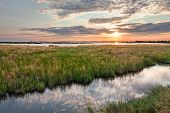 picture of marshlands  - landscape at sunset of the swamp  - JPG
