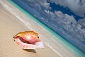 Shell On A White Sand Beach Near Blue See