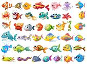 image of aquatic animal  - Illustration of may kinds of fish - JPG