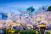 image of night-blooming  - Osaka - JPG