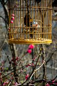 pic of caged  - a lonely bird in cage in a cage - JPG