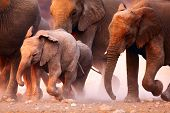 stock photo of herd  - Elephant herd on the run in Etosha desert - JPG