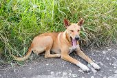 picture of stray dog  - Close up dirty stray dog sitting and yawn on grass beside bumpy road - JPG