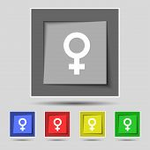 stock photo of gender  - Symbols gender Female Woman sex icon sign on the original five colored buttons - JPG