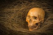 pic of morbid  - still life of skull on dried grass - JPG